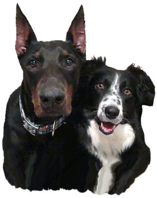 doberman and border collie outsmarting dogs