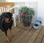 Pet Dog Management